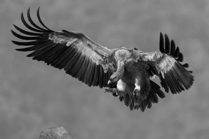 In the aftermath of a tender, the vultures will prey on the carnage